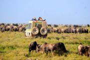 Tanzania Safaris: Options 1